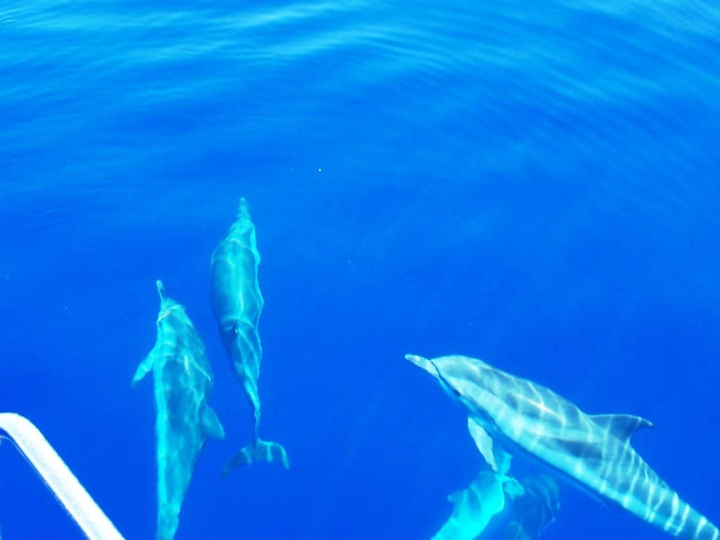 Dodecanese Flotilla Holiday kos dolphins